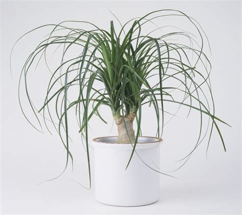 plants that don t need water houseplants that don t need much water hard to kill