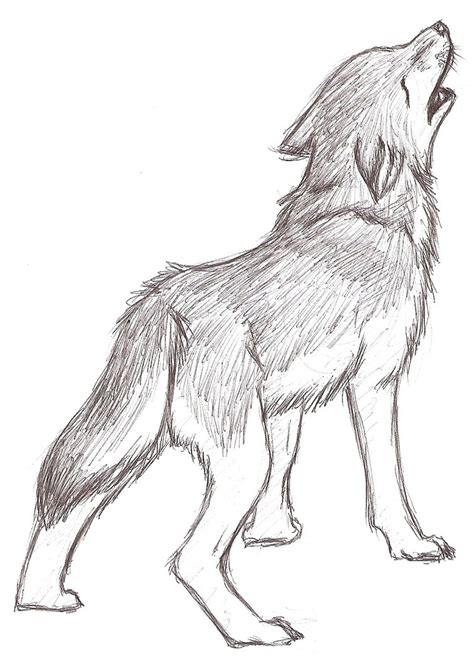 sketchbook anime wolf 120 pages of 8 5 x 11 blank paper for drawing books wolf howling sketch by twins6292 on deviantart