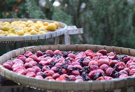 alimenti contengono acido clorogenico prugne secche preziose alleate della salute mangiare