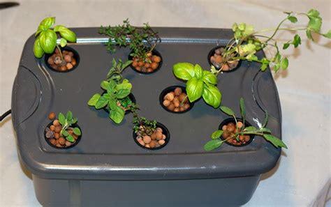 hydroponic herb garden guide grow fresh herbs year