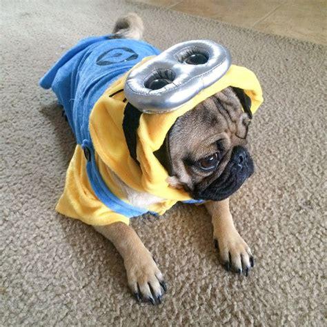 doug the pug website