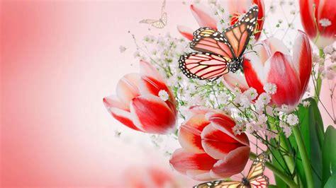 imagenes de rosas full hd mariposas y tulipanes rosados full hd en fondos 1080