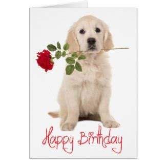 happy birthday golden retriever golden retriever gifts on zazzle