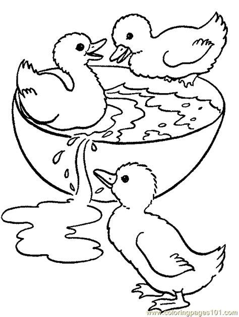 free coloring pages of baby ducks