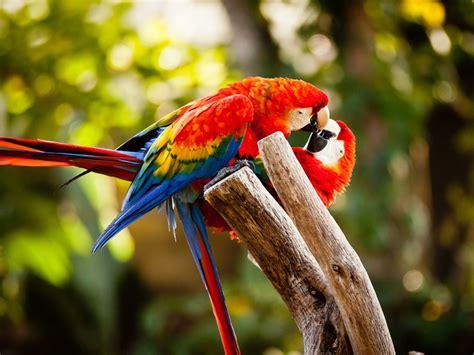 wallpaper burung2 cantik gambar wallpaper burung tercantik