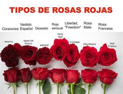 imagenes todas rojas tipos de rosas rojas en el mundo serviflor funeral