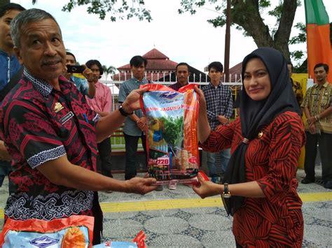 Benih Jagung Per Kg Indah Launching Pendistribusian 32 565 Kilogram Benih Jagung Koran Seruya