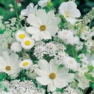 beautiful pictures images white flowers wallpaper and