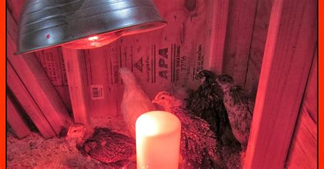 alternative to heat l for chickens the chicken 174 the dangers of brooder heat ls a