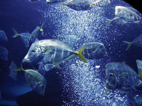 wallpaper laut cantik koleksi gambar ikan hias cantik