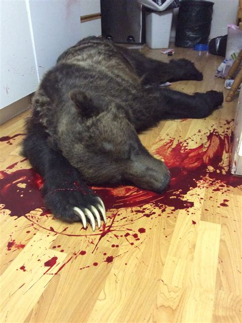 bear in house grizzly bear shot dead in bc house family quot grateful to be alive quot world news gaga