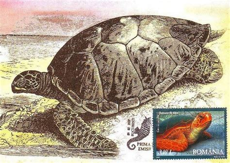 hermanns tortoise testudo hermanni