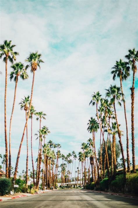 California Palm 25 best ideas about california palm trees on