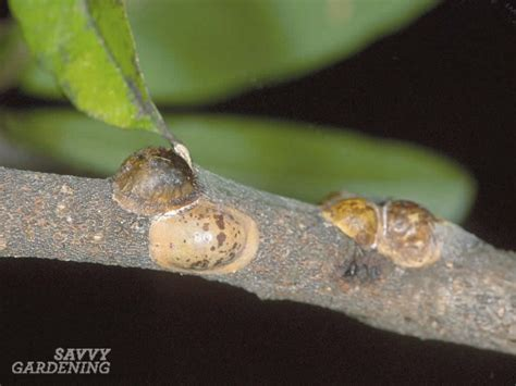 common house plant infestations types of houseplant bugs who they are and what to do
