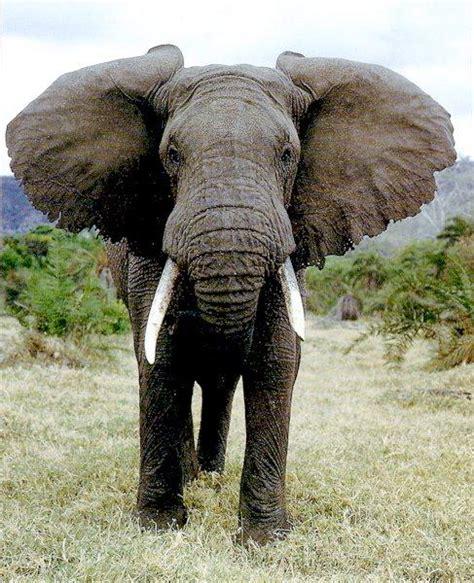 Elephant Ls For Nursery by Mplsblock4 Savanna Animals