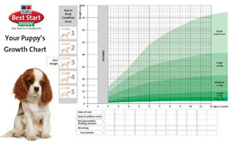 golden retriever growth rate golden retriever puppy growth chart pictures to pin on pinsdaddy