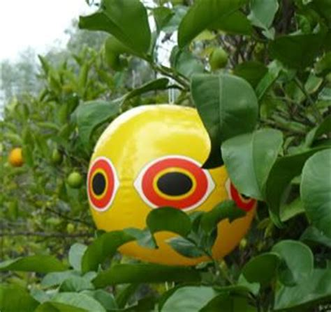 keep birds fruit trees 17 best images about keep birds away on