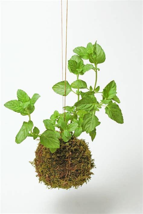 10 easy pieces kokedama plants gardenista