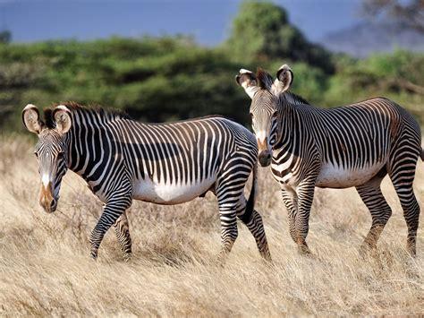 imagenes realistas de animales imagenes animales omn 237 voros chainimage