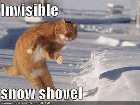 Shoveling Snow Meme - invisible cat meme the trupanion blog