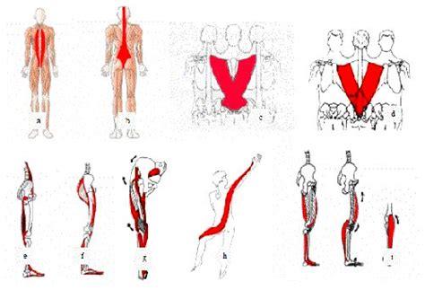cadenas musculares philippe cignion pdf entrenamiento por cadenas musculares