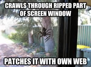 Funny Spider Meme - cute spider meme memes