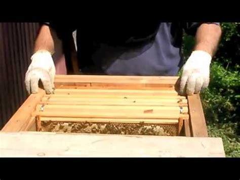 tanzanian top bar hive how to build a pagoda hive doovi