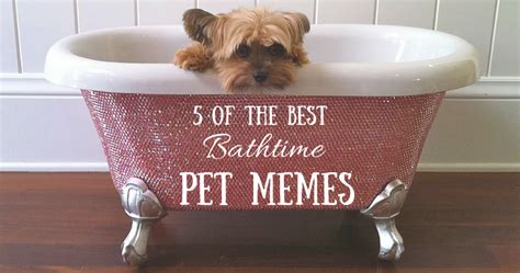 Bubble Bath Meme - the best bathtime pet memes guaranteed to make you squeal