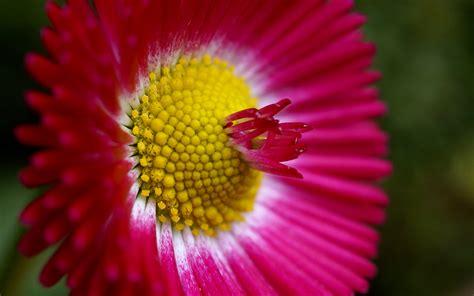 wallpaper flower high resolution high resolution flower wallpaper 82611