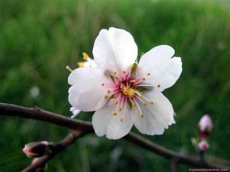 imagenes de rosas blancas animadas flores flores animadas flores blancas flores bonitas