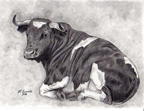 imagenes de vacas a lapiz dibujos a l 225 piz temas taurinos el blog de nacho