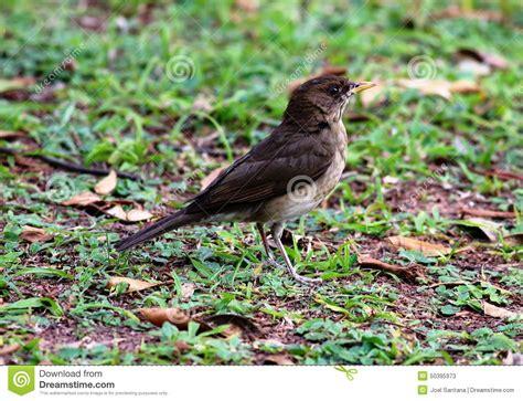 bird walking on the ground stock photo image 50395973