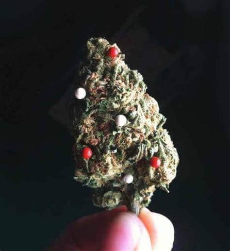 christmas tree kush the world s best photos of kush and marijuana flickr hive mind