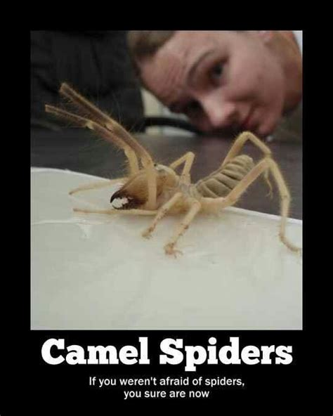 Friendly Spider Meme Picture Webfail - 139 best images about nope nope nope on pinterest