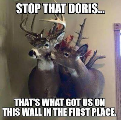 Funny Deer Memes - a dixie lady deer hunter stop that hunting signs
