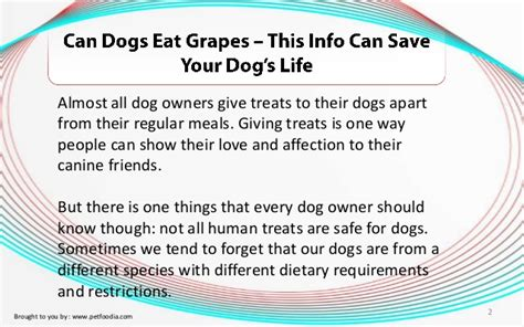 can you give dogs grapes can dogs eat grapes this info can save your s