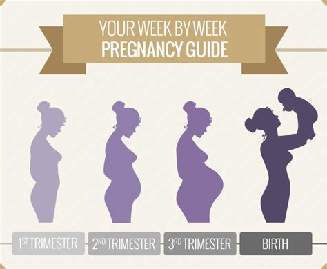 pregnancy guide a month by month pregnancy guide for time with all the helpful tips and information that you need books pregnancy week by week guide pregnancy symptoms s