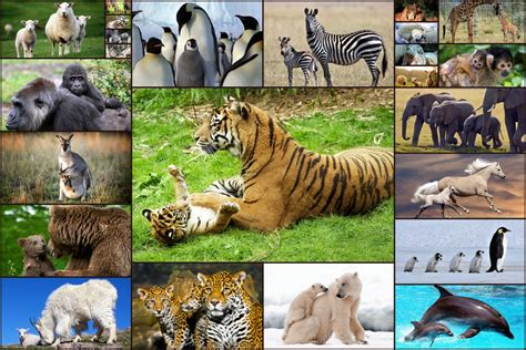 Baby Animal Puzzle animal babies jigsaw puzzles adults