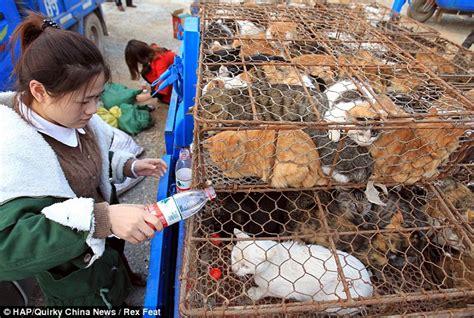 Lu Di Kandang Kucing 199 莢n窶囘e 500 ked莢 yemek olmaktan anda kurtarildi