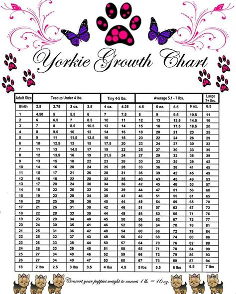 yorkie size chart yorkie puppy weight growth chart breeds picture