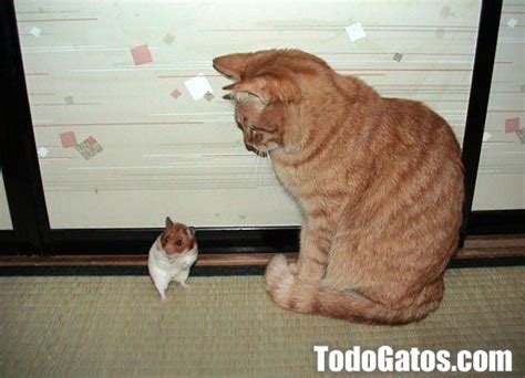 imagenes chistosas gatos fotos chistosas de gatos