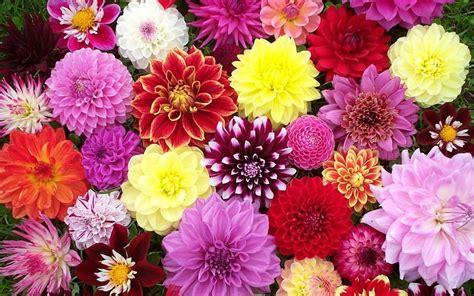 flower blog an inspirational blog about flowers