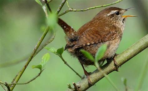 birding   fz panasonic compact camera talk forum