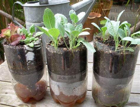 membuat tanaman hidroponik cara membuat tanaman hidroponik sederhana http