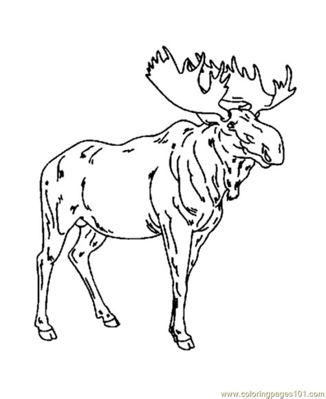 moose coloring pages for kids coloring home