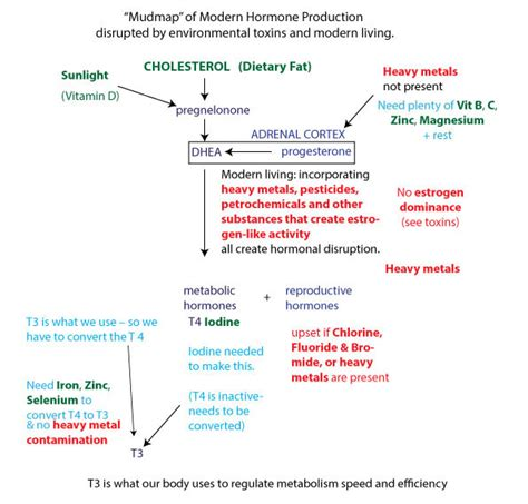 Bromide Poisoning Detox by Hormones And The Hormonal Mud Map Simple Detox