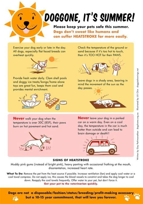 Some Tips For Summer by Columbus Pet Health Summer Safety Tips For Pets Things