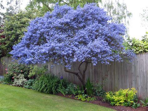 garden inspiration garden inspiration picmia