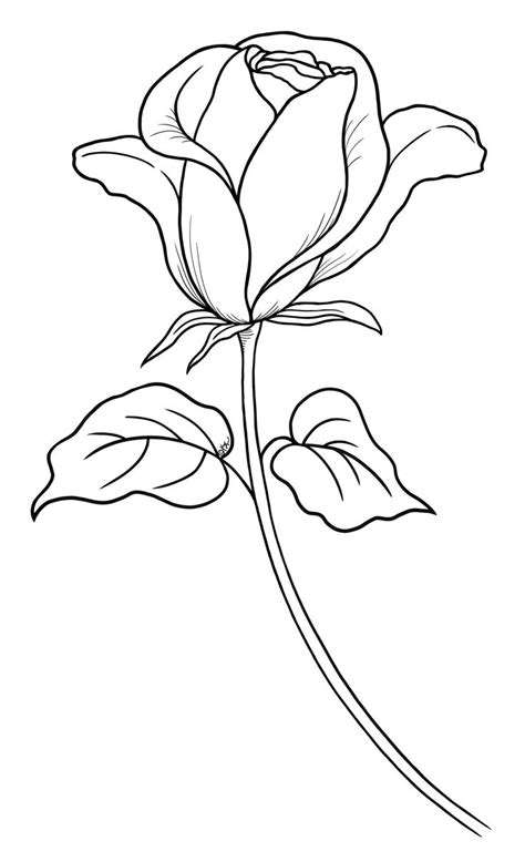 single rose coloring page 17 best images about roses on pinterest rose patterns
