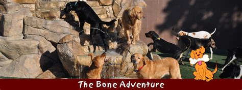 the bone adventure backyard the bone adventure orange county dog daycare boarding